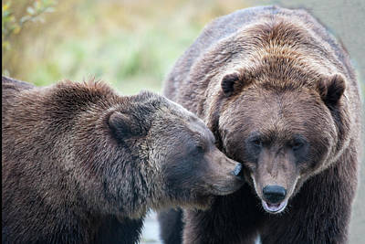 Michael Barry Photograph - Whispering Bears by Michael Barry