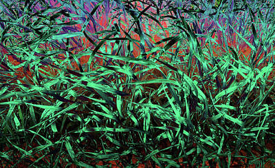 Photograph - Whispering Grass by David Pantuso