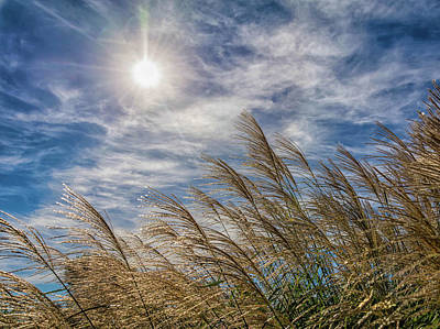 Photograph - Whispering Grasses by Patti Raine