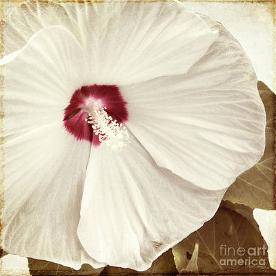 Floral Painting - Whispering Hibiscus by Mindy Sommers