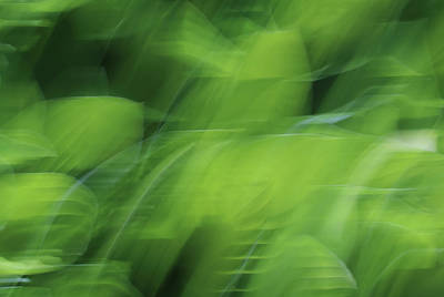 Photograph - Whispering Hostas by Rachel Cohen
