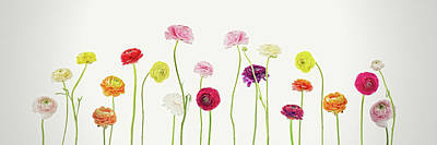 Susann Serfezi Photograph - Whispering Spring by AugenWerk Susann Serfezi