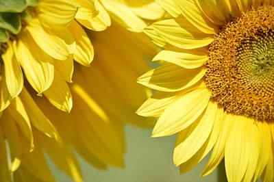 Photograph - Whispering Sunflowers by Jewels Blake Hamrick