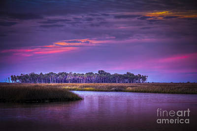 Palmetto Photograph - Whispering Wind by Marvin Spates