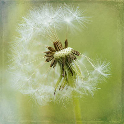 Photograph - Whispers In The Wind by Fraida Gutovich