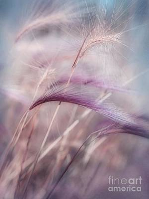 Meadow Photograph - Whispers In The Wind by Priska Wettstein