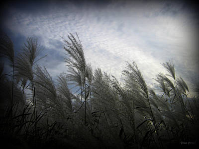 Photograph - Whispers In The Wind by Trina Prenzi