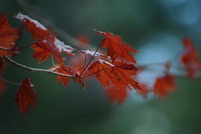 Photograph - Whispers Of Autumn by Fraida Gutovich