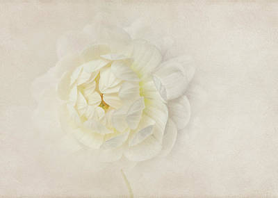 Photograph - Whispers Of White by Mary Jo Allen