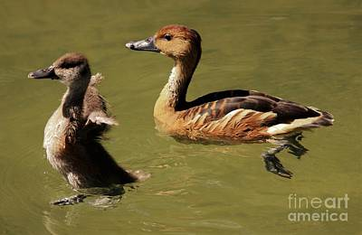 Photograph - Whistling Mama And Baby Duck by Paulette Thomas