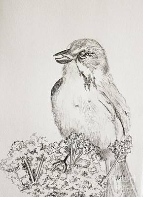 Drawing - Whistling Warbler by Maria Urso