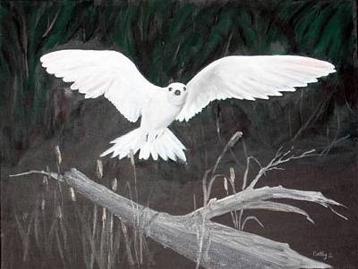 Painting - White Tern by Catherine Swerediuk