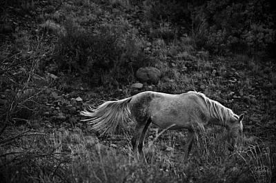 Photograph - White 47 by Catherine Sobredo