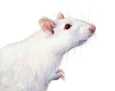 Rodent Wall Art - Painting - White Albino Rat Watercolor by Olga Shvartsur