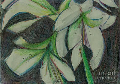Drawing - White Amaryillis by Diane montana Jansson