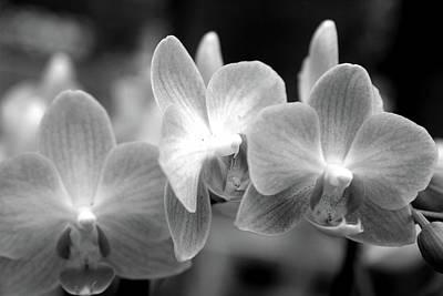 White And Black Orchids Original
