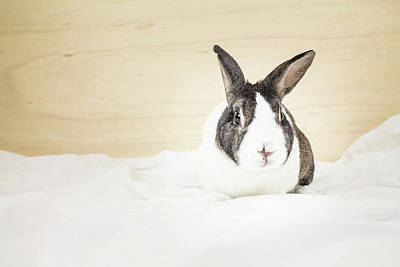 Photograph - White And Brown Rabbit by Jeanette Fellows