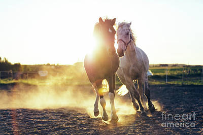 Photograph - White And Dark Horse Gallopading In The Sand by Michal Bednarek