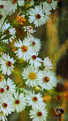 Glazier Photograph - White And Green Asters by Garth Glazier