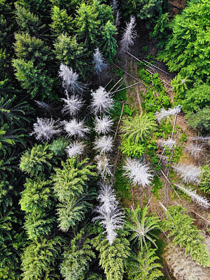 Photograph - White And Green Trees From Above Aerial View by Matthias Hauser