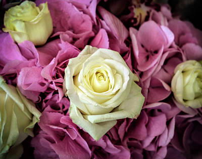 Photograph - White And Pink Roses by Judi Saunders