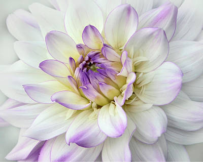 Photograph - White And Purple Dahlia by Ann Bridges