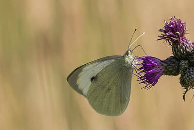 Photograph - White And Purple by Wendy Cooper
