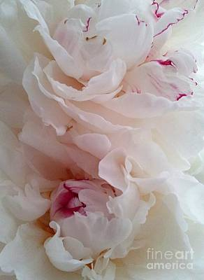 Photograph - White And Red Peonies by Margaret Newcomb