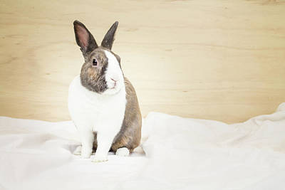 Photograph - White And Tan Rabbit by Jeanette Fellows
