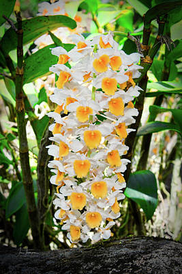 Photograph - White And Yellow Orchids by Jim Thompson