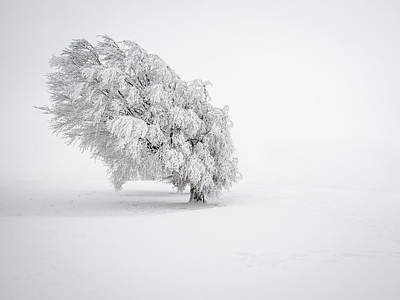 Winter Trees Photograph - White by Andreas Wonisch