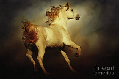 Photograph - White Arabian Horse With Long Beautiful Mane by Dimitar Hristov