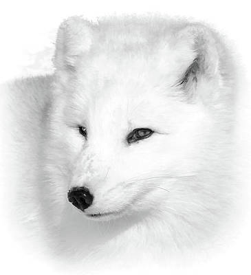 Photograph - White Arctic Fox Bw Portrait by Athena Mckinzie