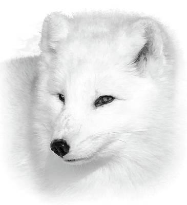 Photograph - White Arctic Fox Bw Portrait by Athena Mckinzie