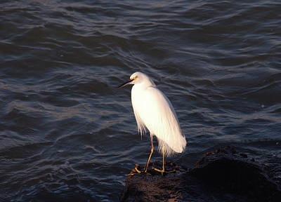 Cape Look Out Photograph - White As Snow by Susanne Van Hulst
