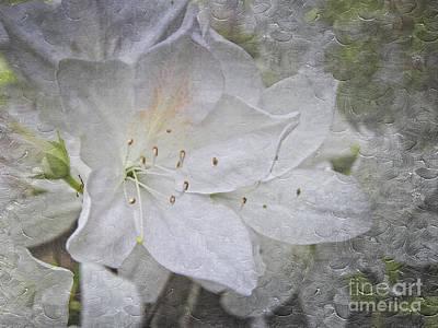 Photograph - White Azalea Artistic Texture by Ella Kaye Dickey