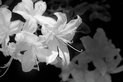 Photograph - White Azalea Flowers Black And White by Jennie Marie Schell