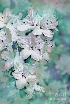 Photograph - White Azaleas by Sandy Moulder