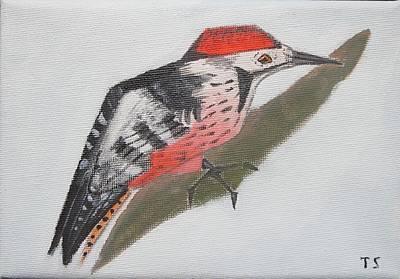 White-backed Woodpecker Art Print