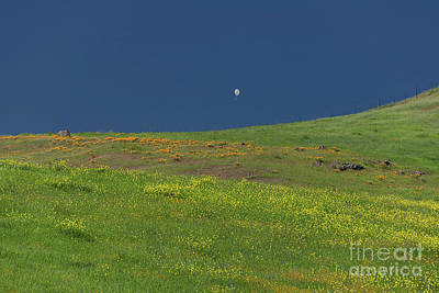 Photograph - White Balloon At Communications Hill 4 by Glenn Franco Simmons