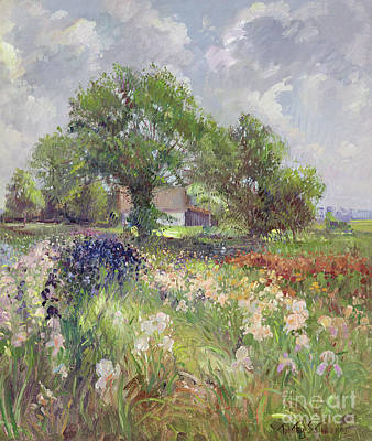 White Barn And Iris Field Print by Timothy Easton