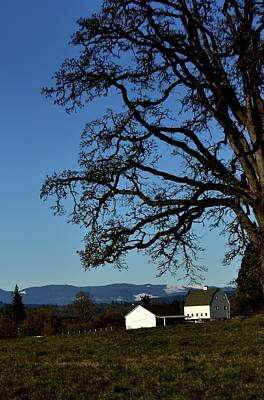 Photograph - White Barn Tree by Jerry Sodorff