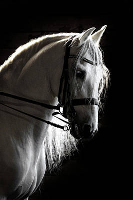 Photograph - White Beauty In The Night by Wes and Dotty Weber