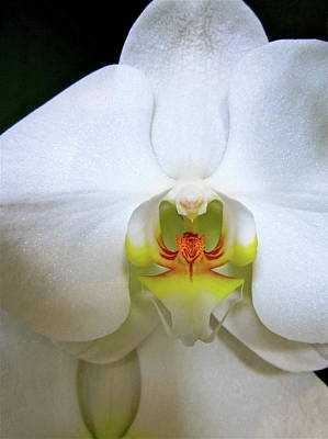 Photograph - White Beauty by Lehua Pekelo-Stearns