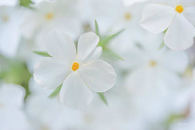 Photograph - White Beauty by Leland D Howard
