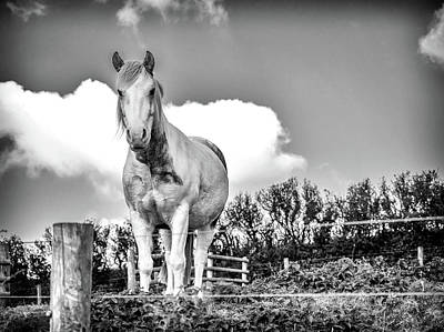 Photograph - White Beauty by Nick Bywater
