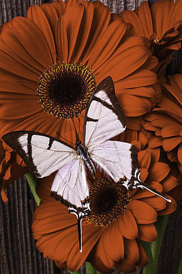 Gerbera Daisy Photograph - White Beauty On Red Daisy by Garry Gay