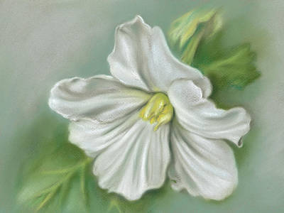 Pastel - White Begonia Flower by MM Anderson