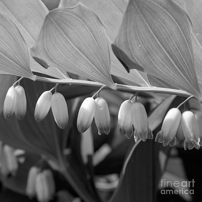 Beautifull Photograph - White Bells Flower by Konstantin Sevostyanov