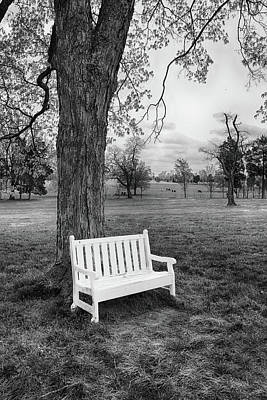 Photograph - White Bench Tree Series 99 by Carlos Diaz